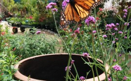butterfly B&B 2