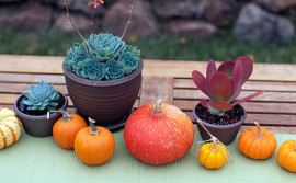 Fall-centerpiece-with-succulents