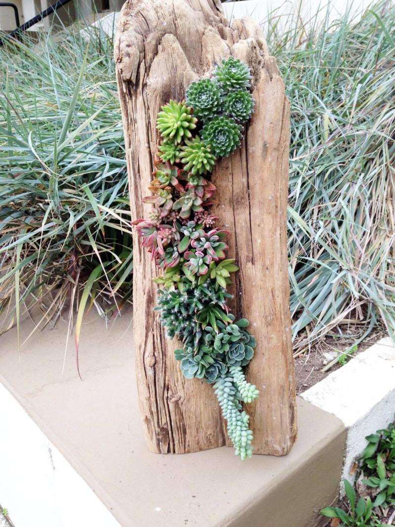 succulent driftwood
