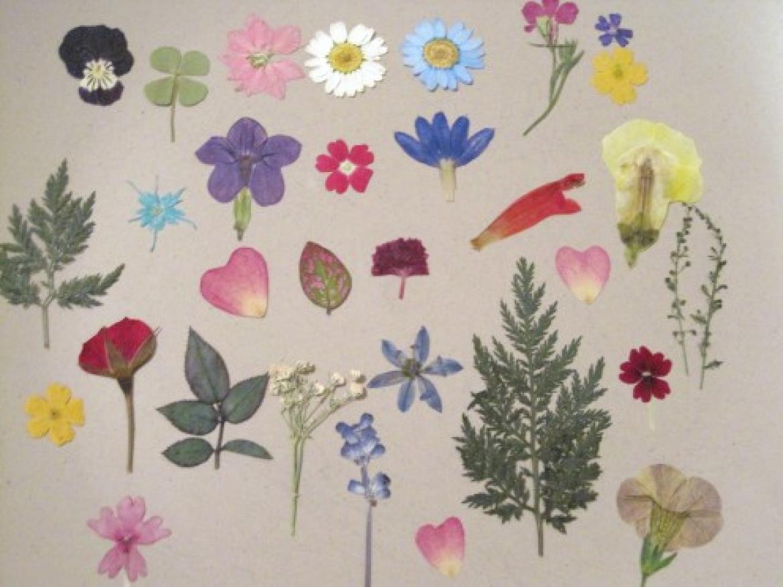 Pressed Flower Platter Workshop with Blue Ladder Botany Designer Diamant Wint