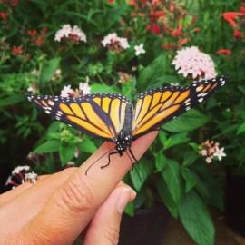 Taryn's butterfly