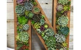 succulentsareforsharing