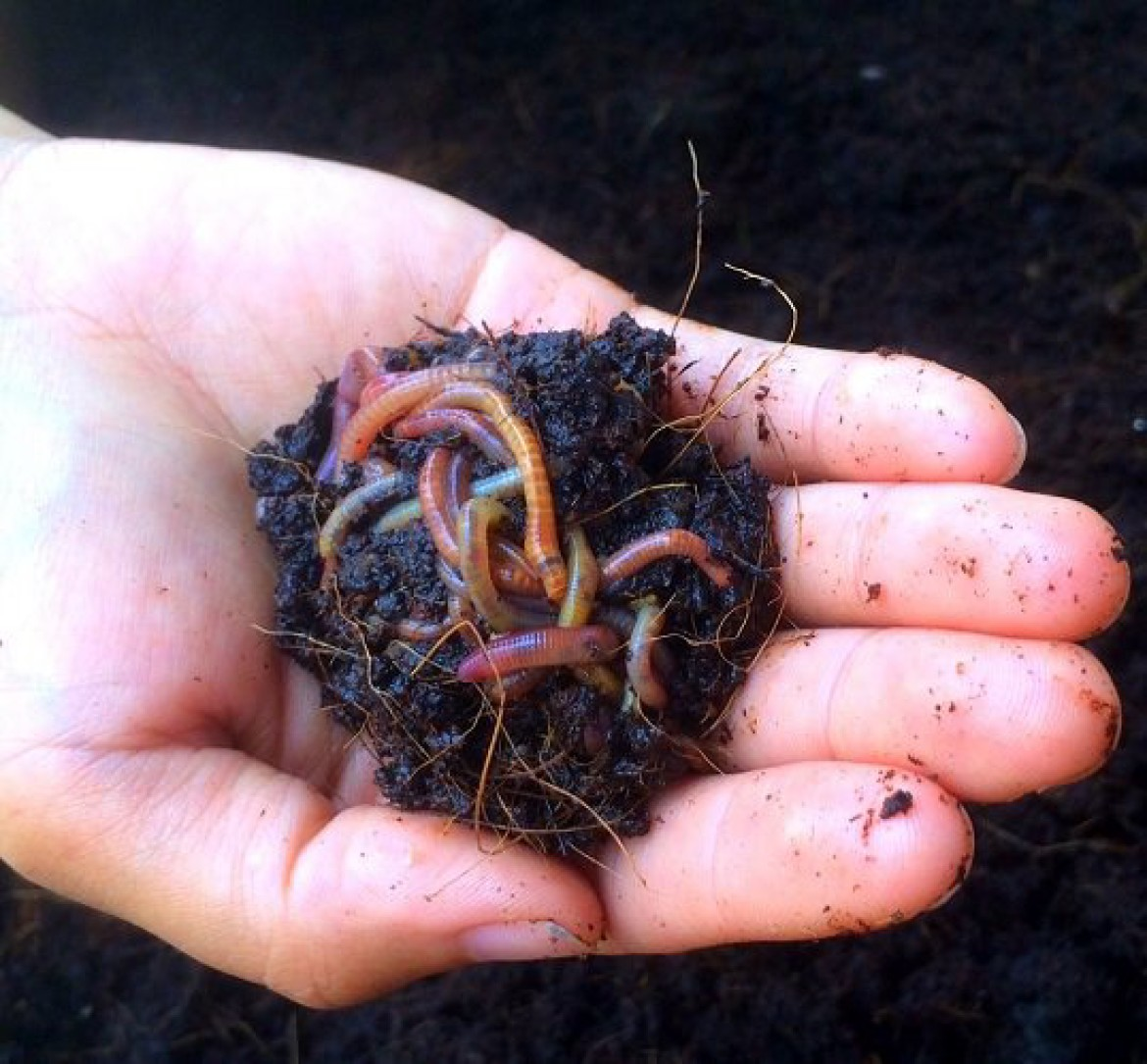 All About Worms Composting Workshop