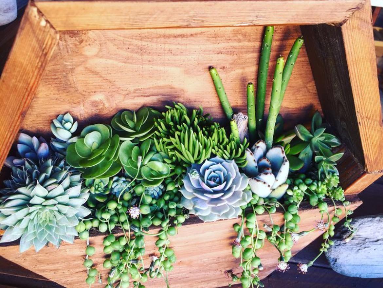 Hexagon Succulent Planter Workshop