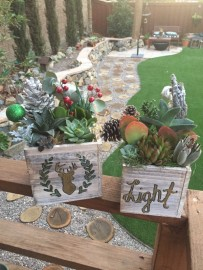 Infinite Succulent Family-Friendly Holiday Succulent Box Workshop