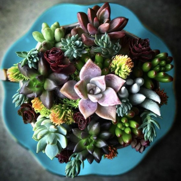 good morning cactus succulent teacup workshop