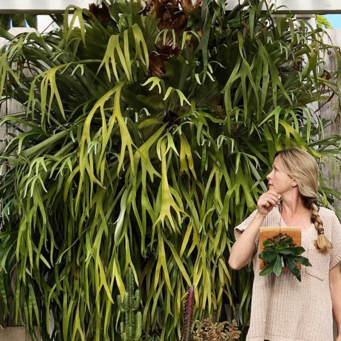SOLD OUT –Staghorn Fern Mounting Workshop