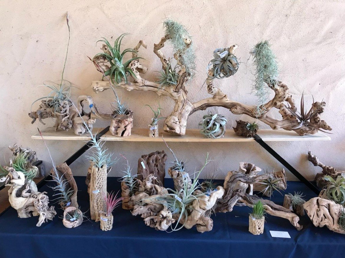 Tillandsia (Airplant) & Driftwood Event