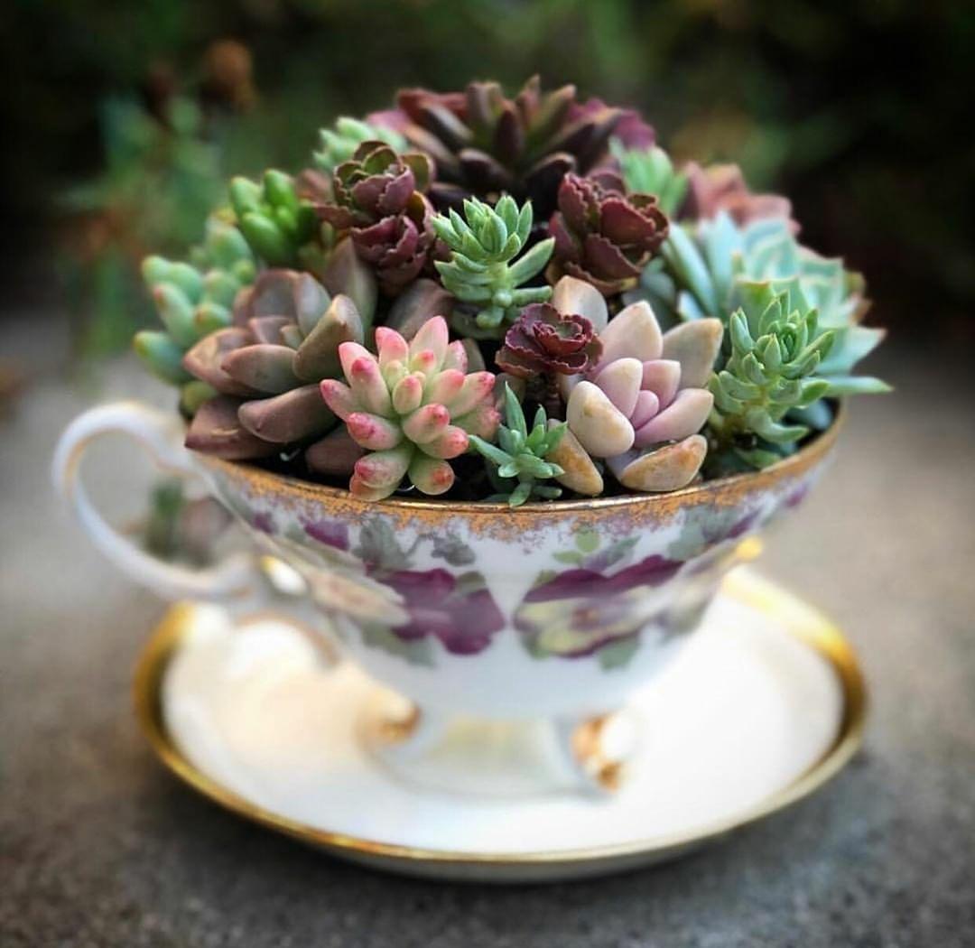 good morning cactus succulent teacup workshop02
