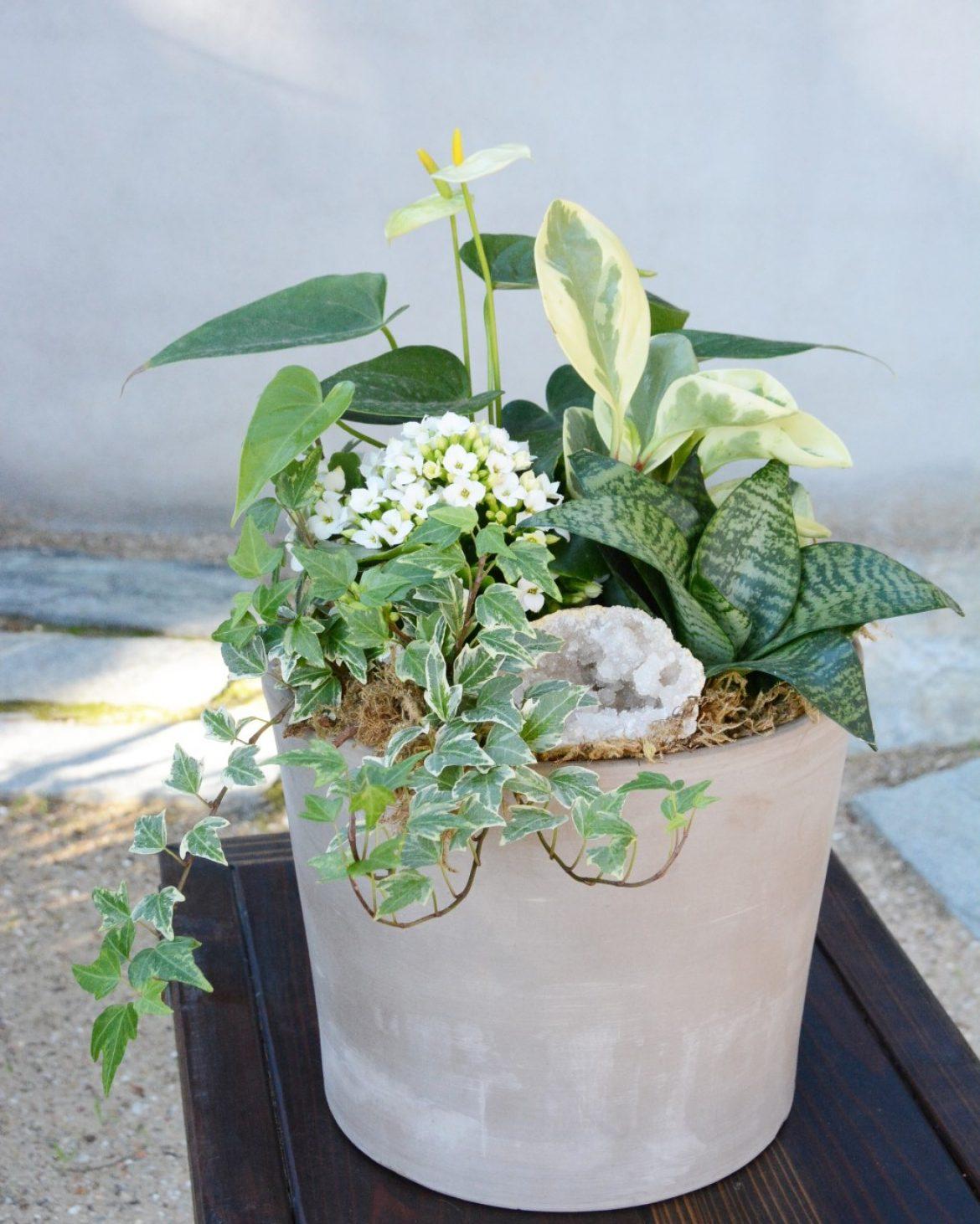 Houseplant Arrangement Workshop