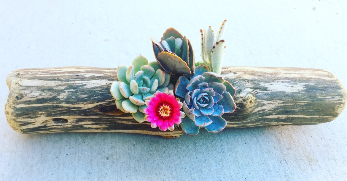 Succulents in Driftwood Workshop