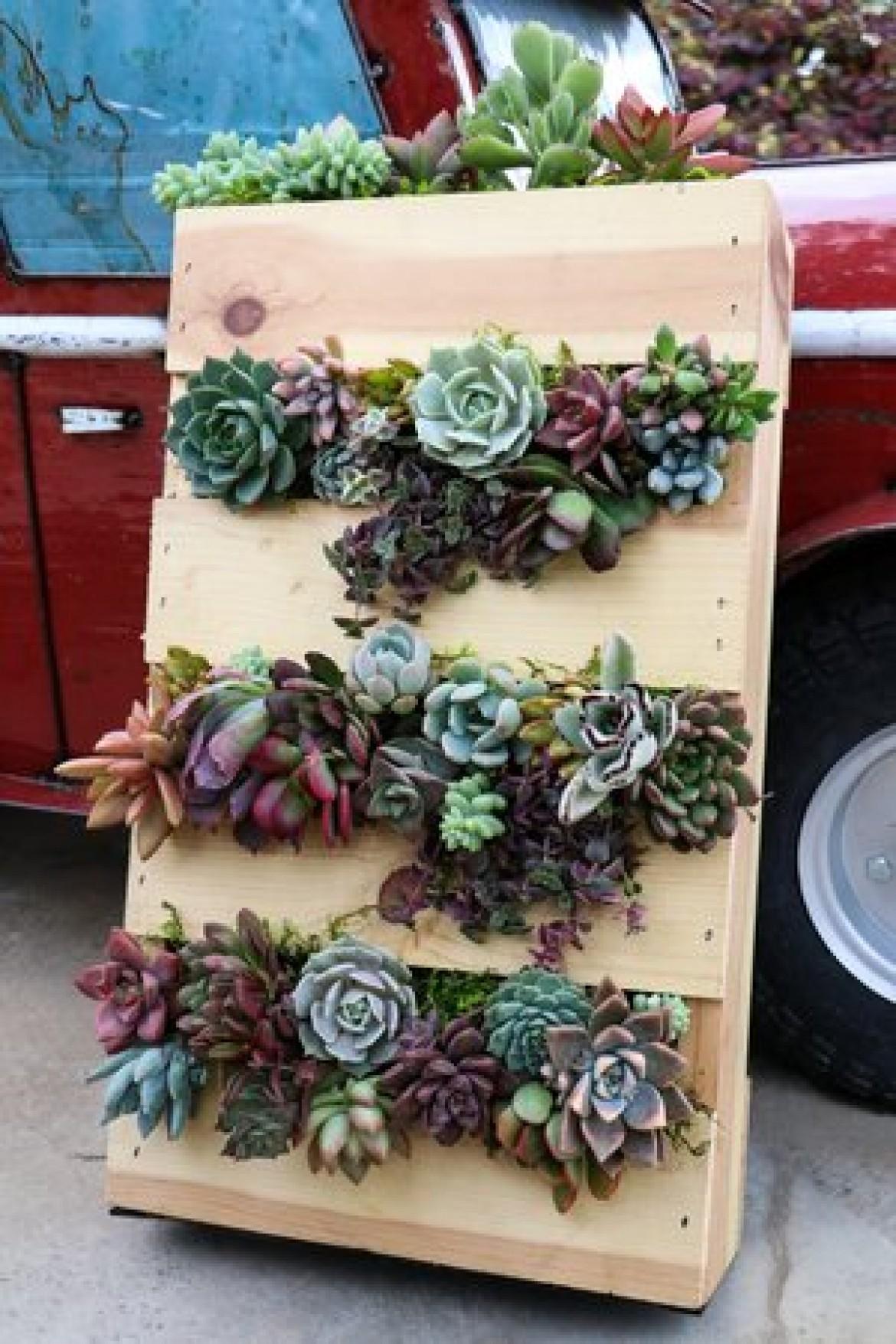 Plant It Up Succulent Pallet Workshop Barrels Branches Nursery