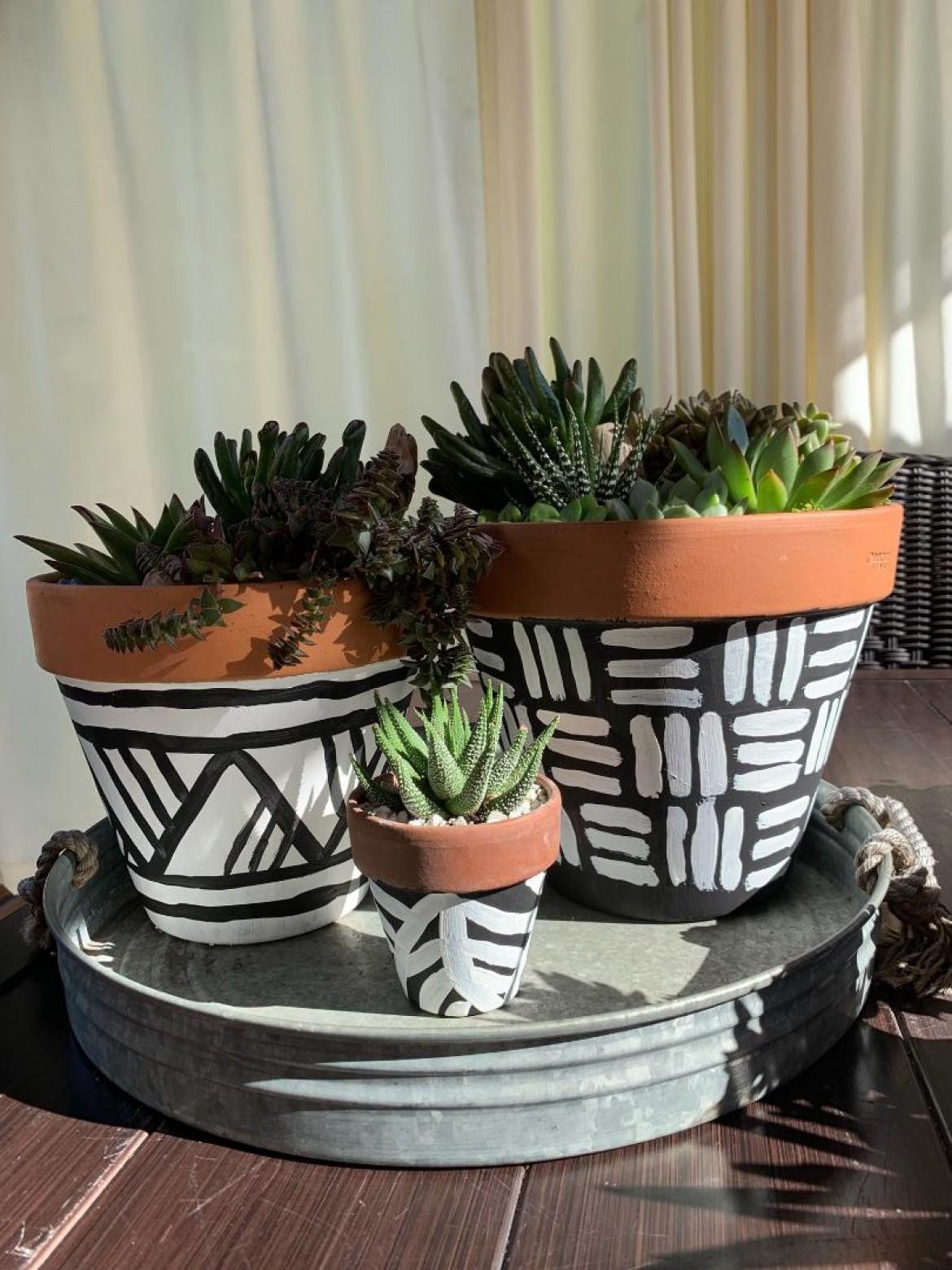 Succulent Paint & Plant Workshop